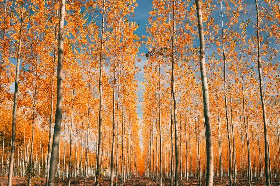 vincent-james-trees-of-mystery-forest-in-autumn-northern-oregon