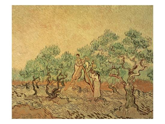 vincent-van-gogh-the-olive-grove