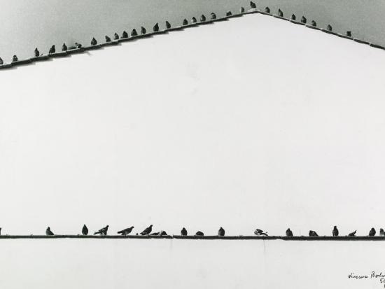 vincenzo-balocchi-pigeons