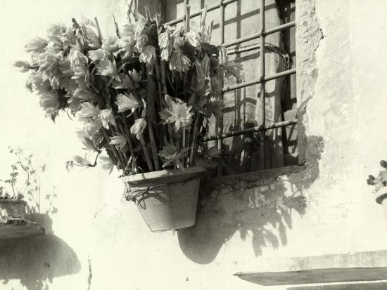 vincenzo-balocchi-vase-with-flowers-hanging-from-the-window-of-an-old-house