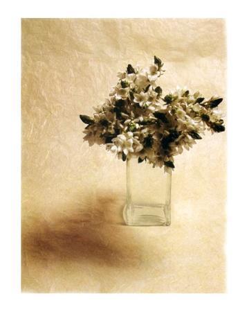 vincenzo-ferrato-cut-flowers-ii