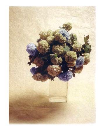 vincenzo-ferrato-cut-flowers-iii