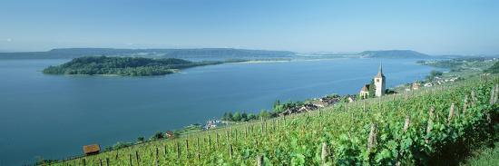vineyard-near-a-village-lake-biel-ligerz-canton-of-bern-switzerland