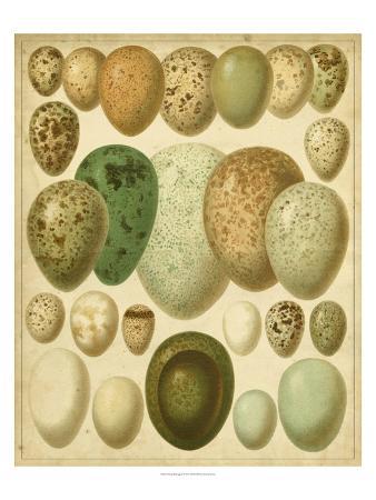 vintage-bird-eggs-ii
