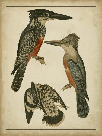 vintage-kingfishers-i