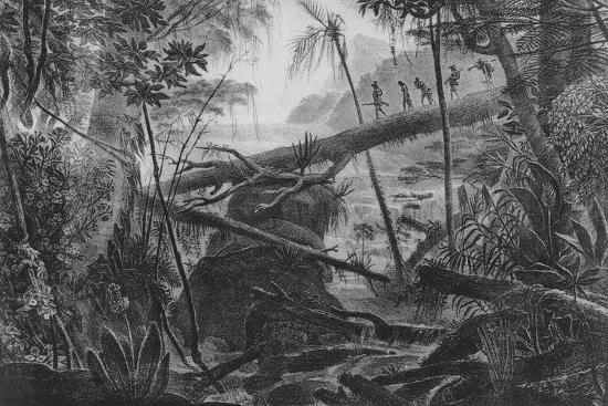 virgin-forest-paraiba-brazil-c-1840