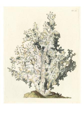 vision-studio-antique-coral-i