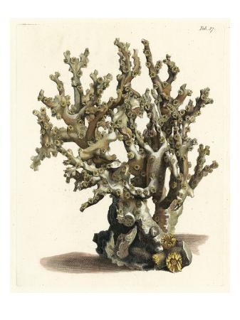 vision-studio-antique-coral-ii