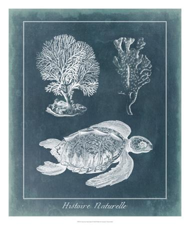 vision-studio-azure-sea-turtle-study-i