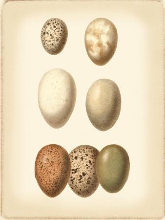 vision-studio-bird-egg-study-ii