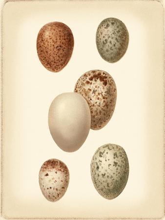vision-studio-bird-egg-study-iii