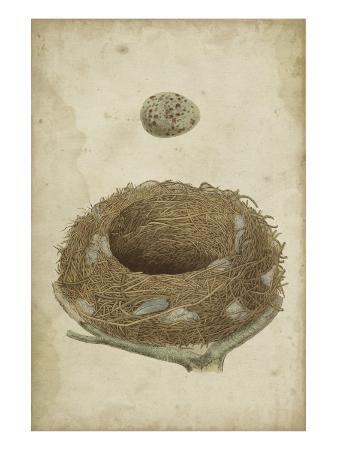 vision-studio-bird-s-nest-study-i