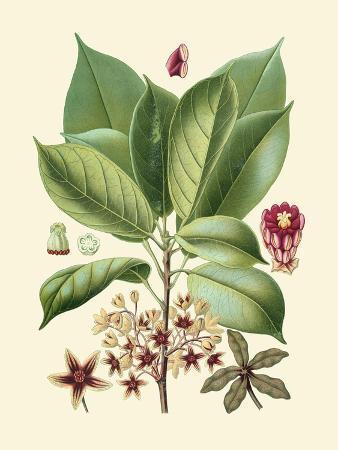 vision-studio-botanical-glory-i