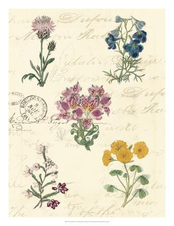 vision-studio-botanical-journal-i