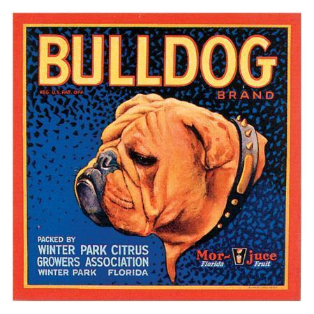 vision-studio-bull-dog
