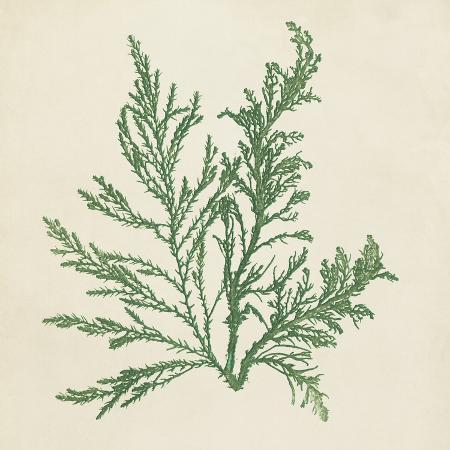 vision-studio-chromatic-seaweed-i