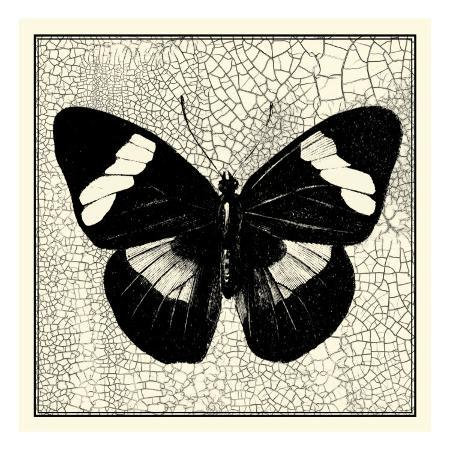 vision-studio-classical-butterfly-iii