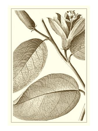 vision-studio-cropped-sepia-botanical-ii