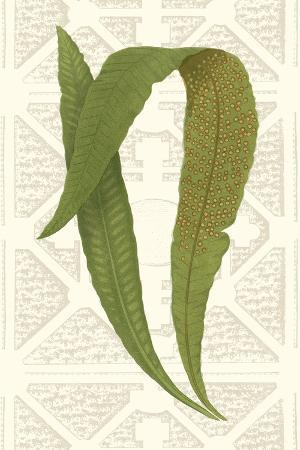 vision-studio-garden-ferns-iv