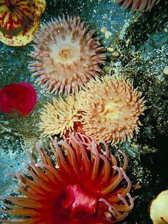 vision-studio-graphic-sea-anemone-iii