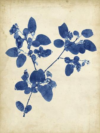 vision-studio-indigo-leaf-study-v