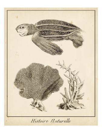 vision-studio-sea-turtle-study-ii