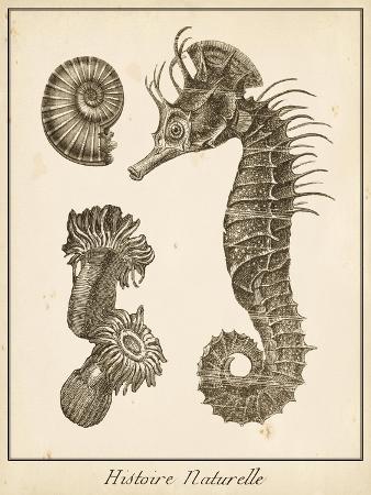 vision-studio-seahorse-study-ii