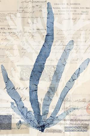 vision-studio-seaweed-arrangement-ii