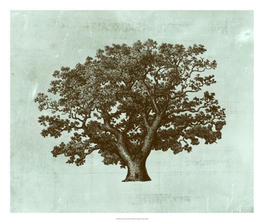 vision-studio-spa-tree-iv