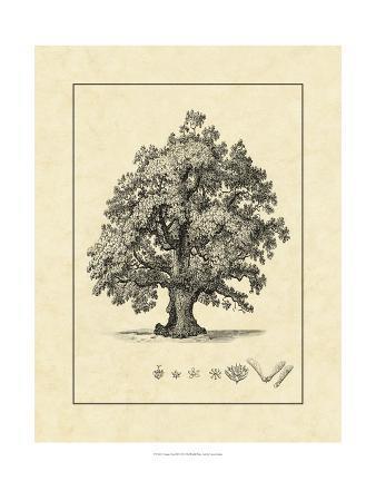 vision-studio-vintage-tree-iii