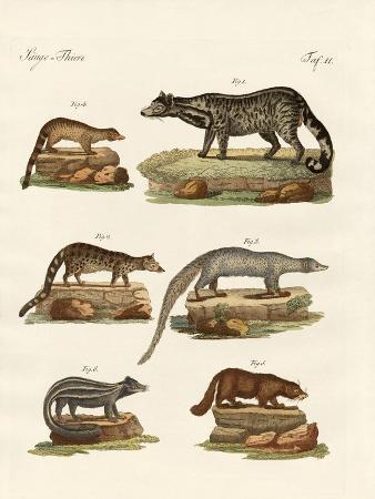 viverras-zibets-skunks