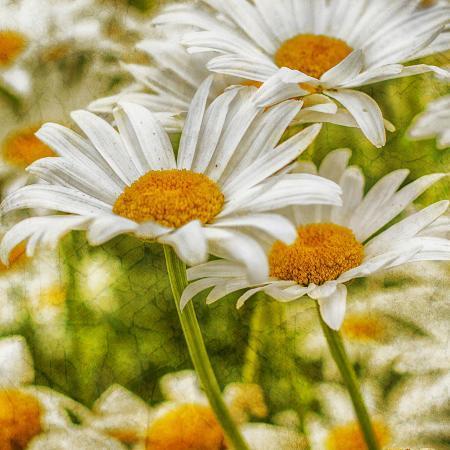 viviane-fedieu-daniel-power-flower