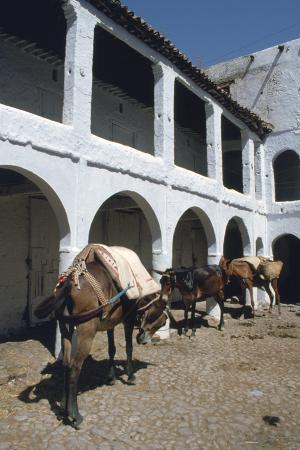 vivienne-sharp-fondouk-chefchaouen-morocco