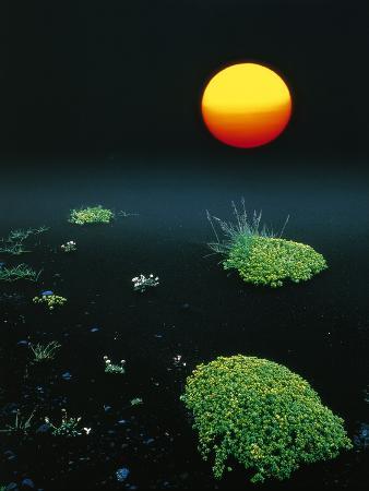 w-krecichwost-sun-over-black-lava-iceland