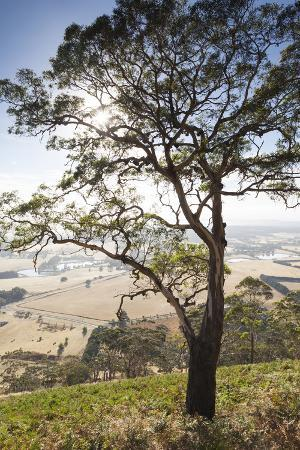 walter-bibikow-australia-victoria-buninyong-landscape-from-mount-buninyong