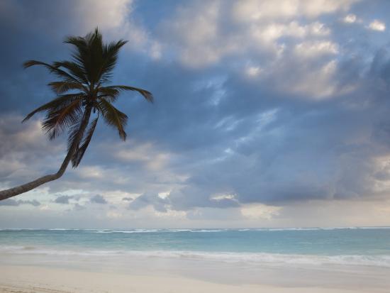 walter-bibikow-bavaro-beach-palms-at-dawn-bavaro-punta-cana-region-dominican-republic