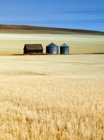 walter-bibikow-grain-barn-rosebud-alberta-canada
