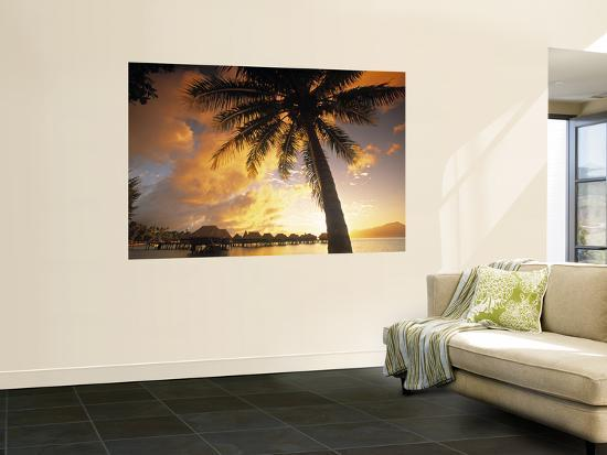 walter-bibikow-palm-tree-sofitel-la-ora-resort-moorea-french-polynesia