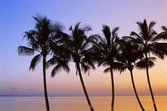 walter-bibikow-usa-hawaii-molokai-palm-tree-morning