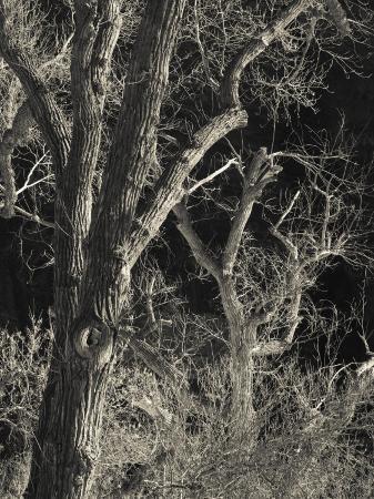 walter-bibikow-utah-zion-national-park-bare-silver-trees-temple-of-sinawava-area-winter-usa