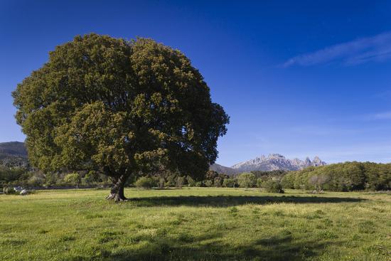walter-bibikow-view-of-the-aiguilles-de-bavella-quenza-corsica-france