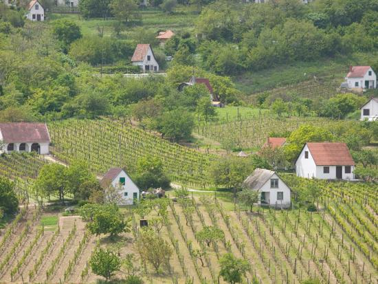 walter-bibikow-vineyard-view-from-calvary-hill-southern-transdanubia-hungary