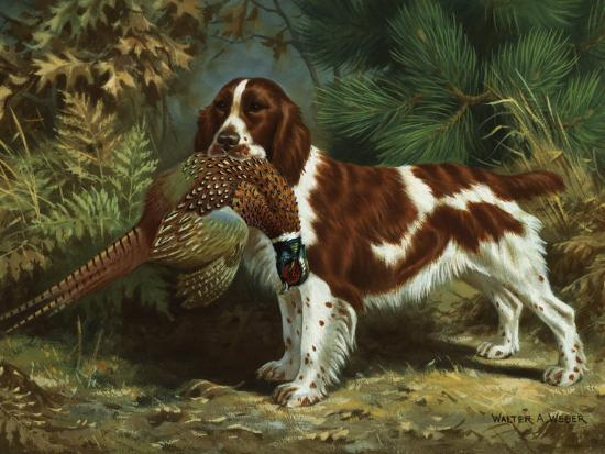 walter-weber-welsh-springer-spaniel-holds-a-dead-bird-in-its-mouth