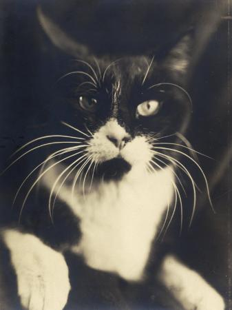wanda-wulz-cat-minus-me-photograph-used-in-the-superimposed-photo-me-and-cat