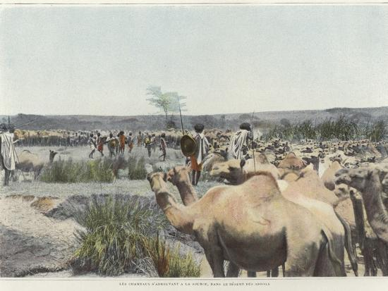 watering-the-camels-at-the-source-in-the-desert