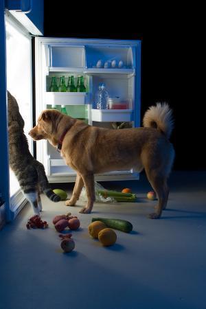 websubstance-midnight-snacks
