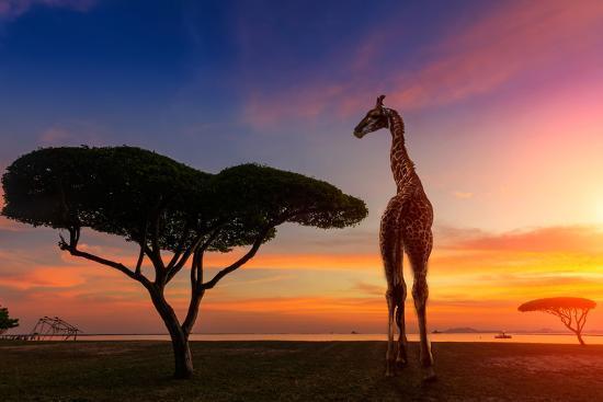 weerasak-saeku-giraffes-in-the-savannah-at-sunset