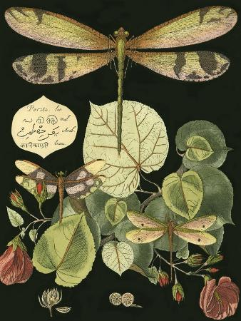 whimsical-dragonfly-on-black-ii
