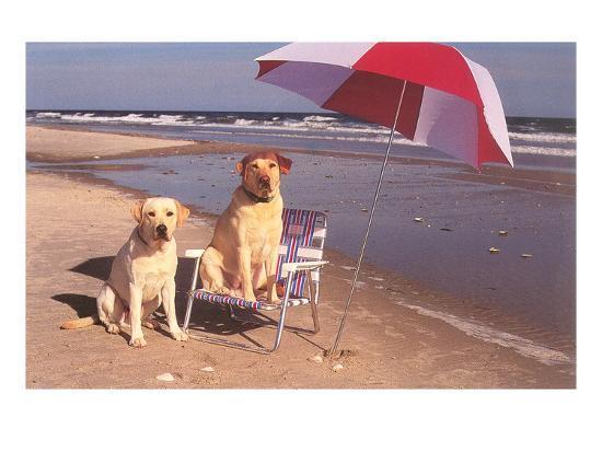 white-labradors-at-the-beach