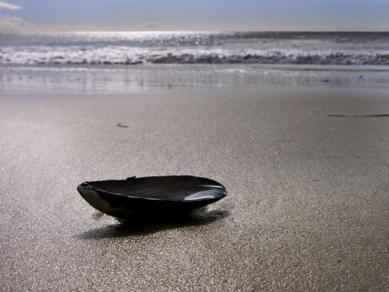 white-petteway-mussel-shell-holding-water-near-surfs-edge-on-a-beach